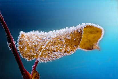 Close Up Frost Hd Wallpaper 64227